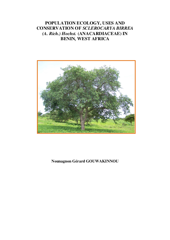 Adansonia digitata 100/% Real /& High germination 10 Graines BAOBAB TREE Seeds