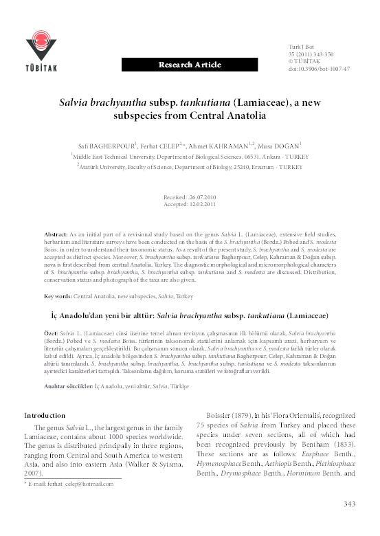 PDF) Salvia brachyantha subsp  tankutiana (Lamiaceae), a new