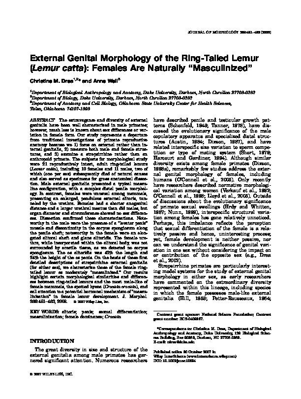 External Genital Morphology Of The Ringtailed Lemur Lemur Catta
