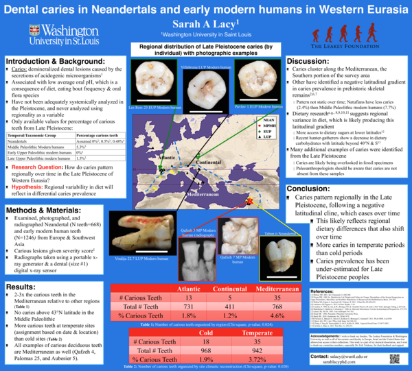 PDF) Dental caries in Neandertals and early modern humans in