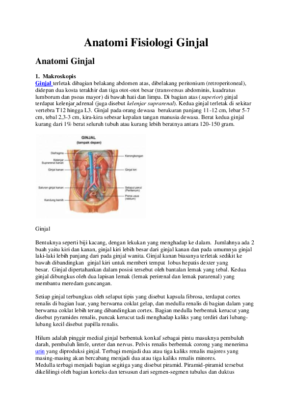 87+ Gambar Vaskularisasi Ginjal