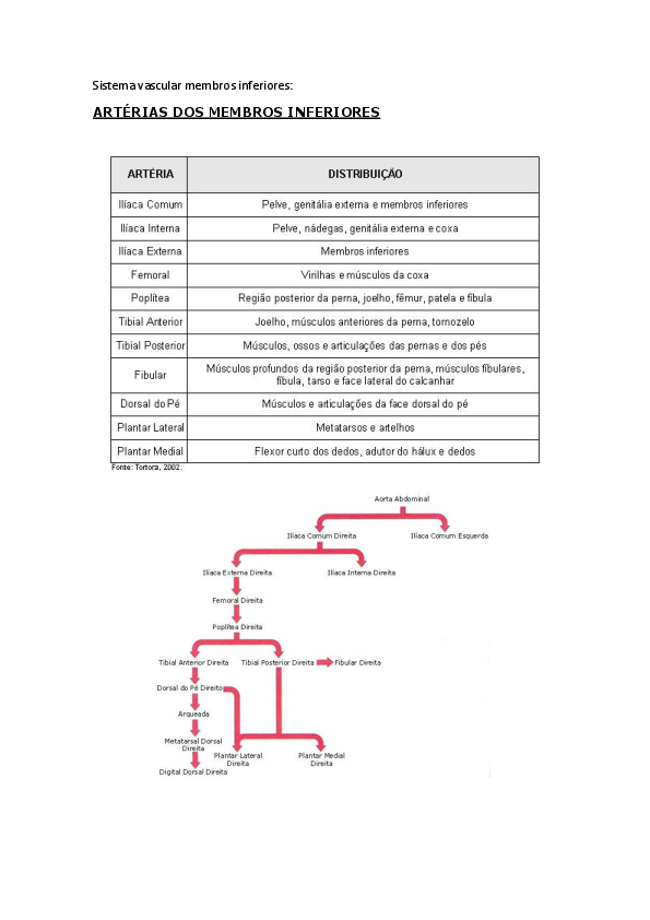 Cardiovascular para para e sistema perna pés sistema os