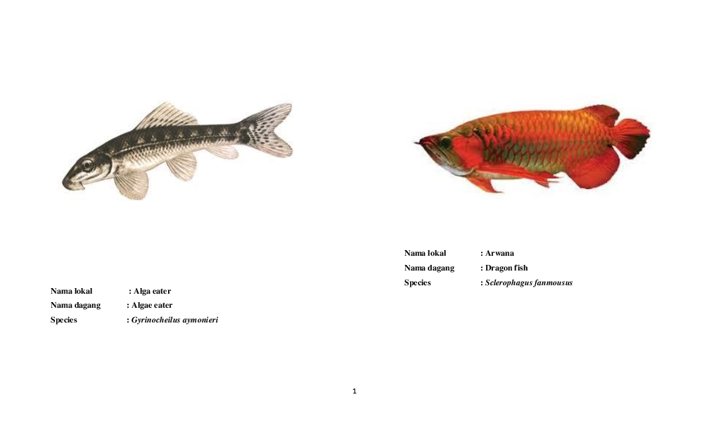 Doc Nama Dagang Lokal Dan Latin Ikan Hias Rahma Mulyani Academia Edu