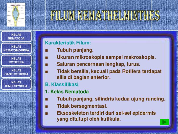 Ppt platyhelminthes și nemathelminthes. Platyhelminthes nemathelminthes ppt. Meniu de navigare