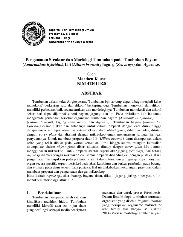 Pengamatan Struktur Tumbuhan Jagung Lili Bayam Dan Jagung