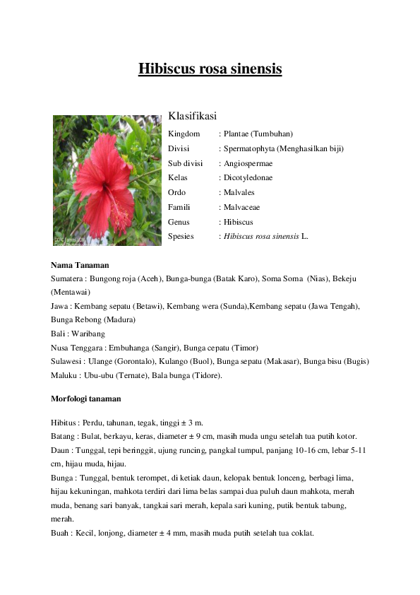 Download 1010+ Gambar Morfologi Bunga Sepatu Gratis Terbaru