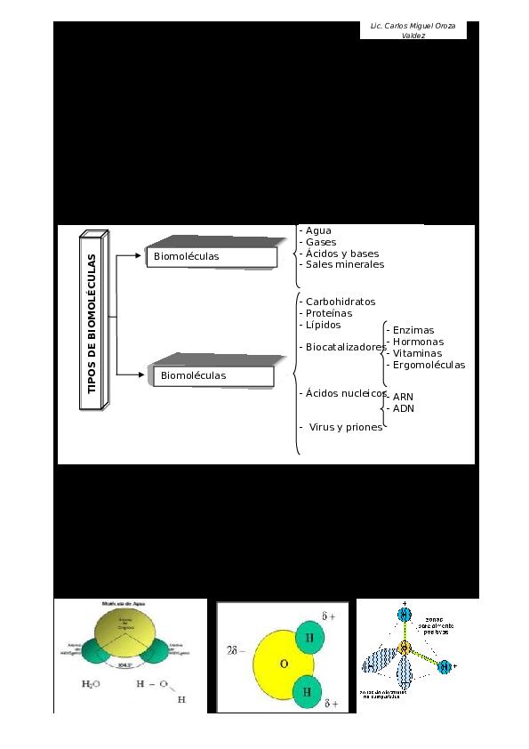 Doc Biomoleculas Rubens Ac Academia Edu