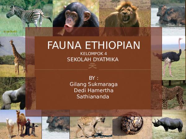 4700 Gambar Fauna Zona Neartik Terbaru