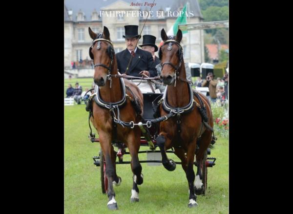 Antiquitäten & Kunst Geräte Hart Arbeitend Pflug Antik Ochse-pferde Restaurietr Durchsichtig In Sicht