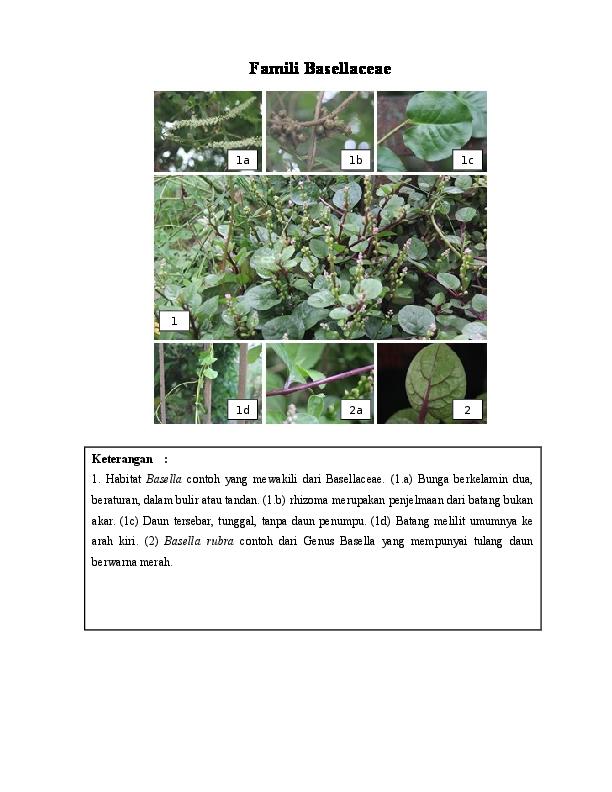 Doc Famili Portulacaceae Yulfi Syarofin Academia Edu