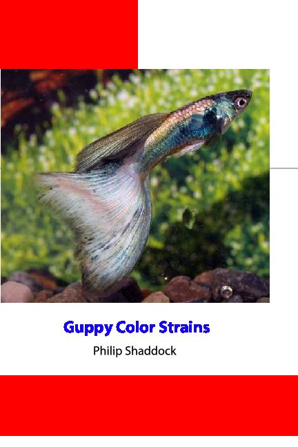 Pdf Guppy Colour Strain By Philip Shaddock Wachyuu Prazetyo Academia Edu