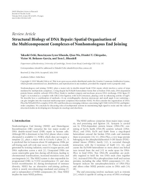 PDF) Structural Biology of DNA Repair: Spatial Organisation