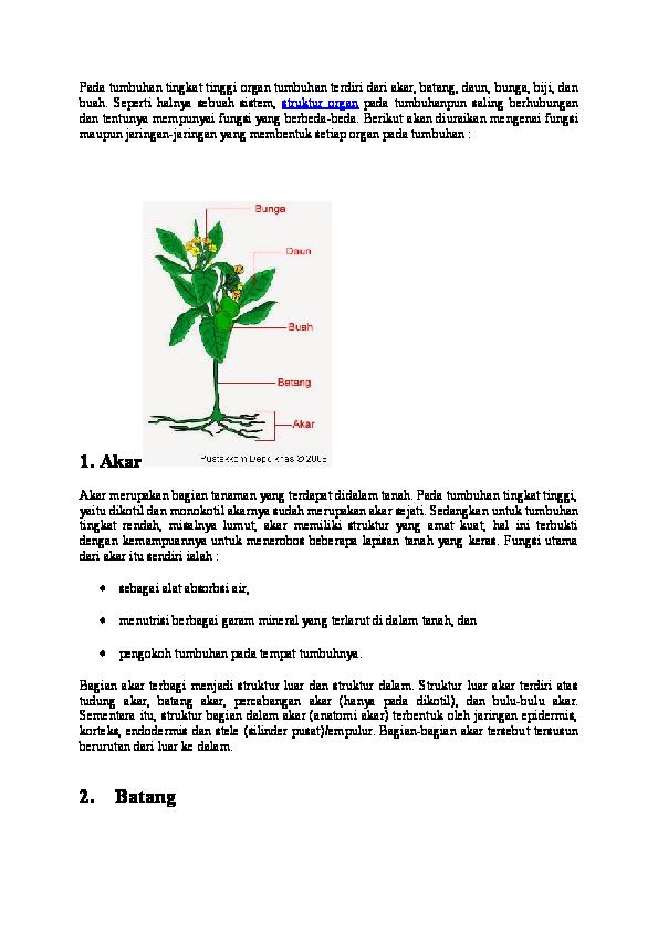 Doc Pada Tumbuhan Tingkat Tinggi Organ Tumbuhan Terdiri Dari Akar Diana Mustika Academia Edu