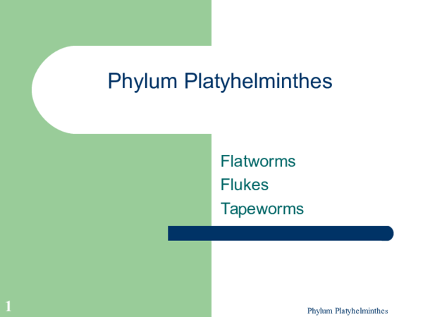platyhelminthes ppt