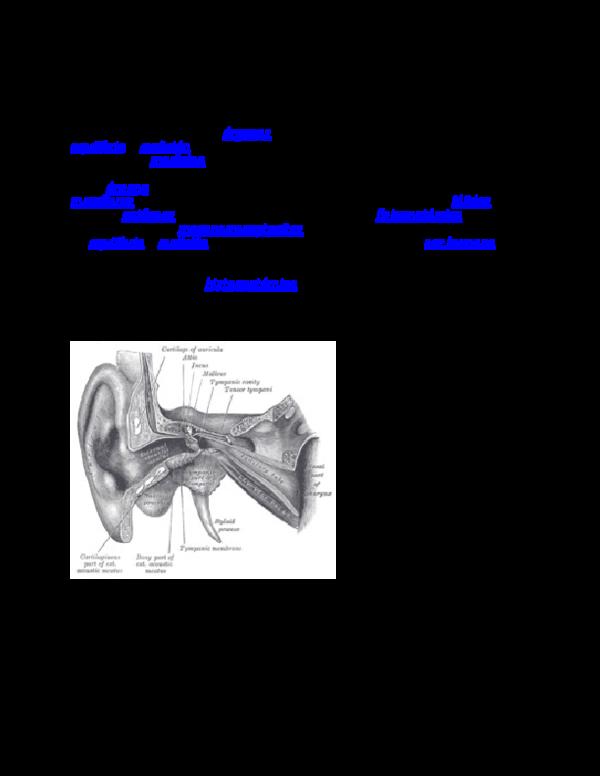 Medicamentos para el equilibrio del oído interno