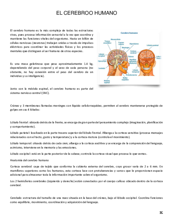 Pdf El Cerebro Humano Criss Sc Academia Edu