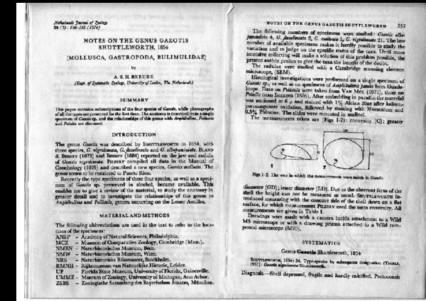 PDF) Notes On the Genus Gaeotis Shuttleworth, 1854 (Mollusca