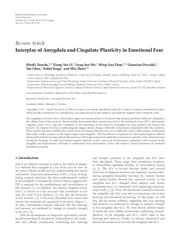 PDF) Interplay of Amygdala and Cingulate Plasticity in