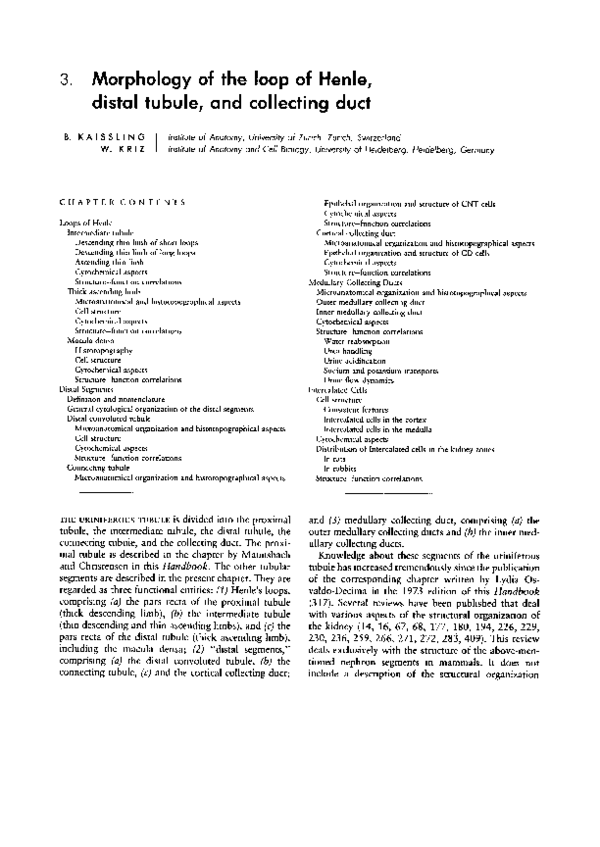 Morphology Of The Loop Of Henle Distal Tubule And Collecting Duct