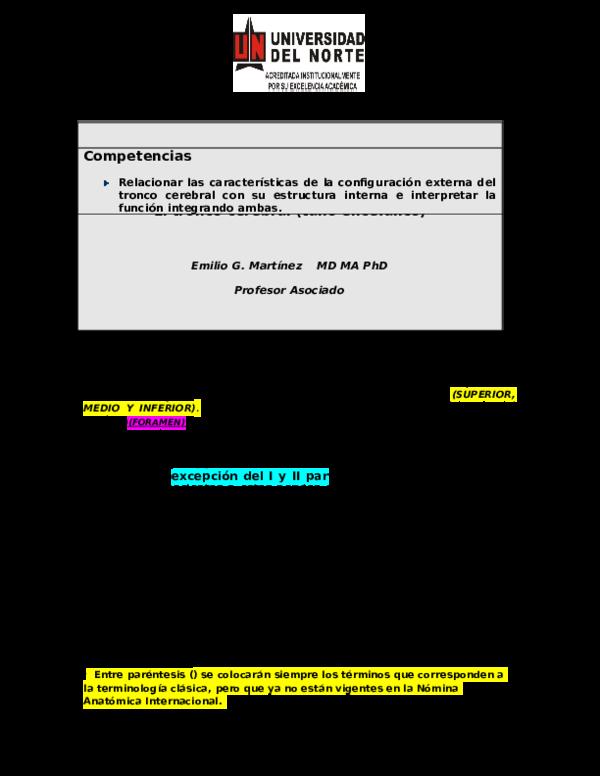 Doc División Ciencias De La Salud El Tronco Cerebral Tallo