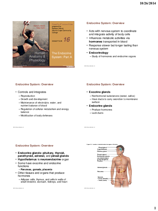 Pdf Human Anatomy Physiology The Endocrine System Part A