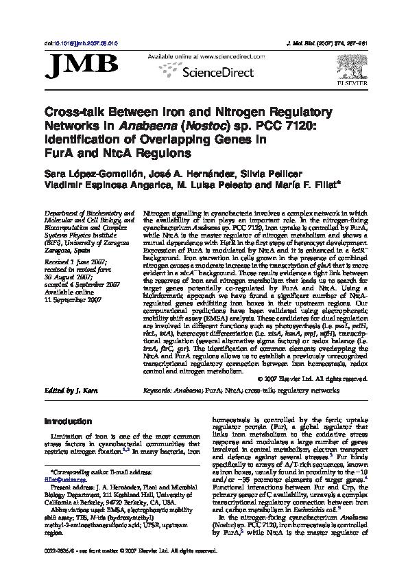 PDF) Cross-talk Between Iron and Nitrogen Regulatory Networks in