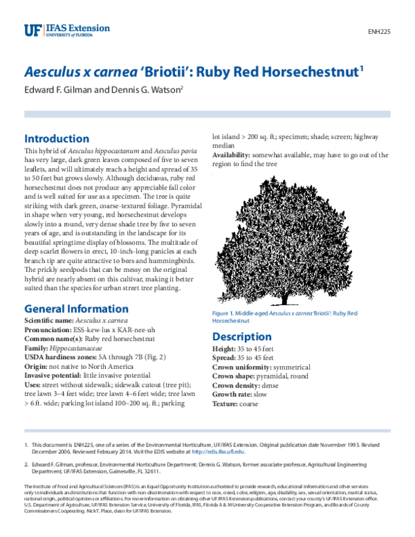 PDF) Aesculus x carnea 'Briotii': Ruby Red Horsechestnut1