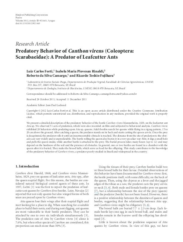 PDF) Predatory Behavior of Canthon virens (Coleoptera