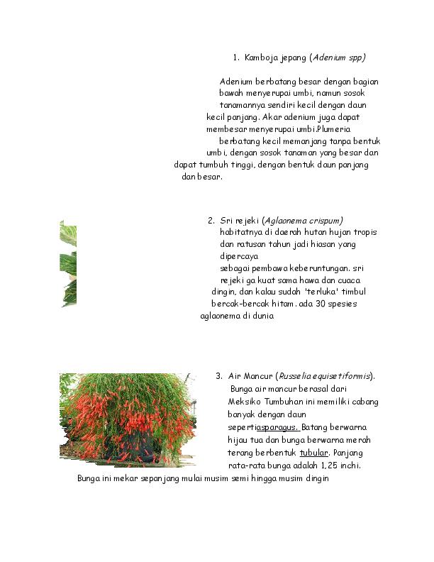 Gambar Bunga Cempaka Hutan Kasar Gambar Terbaru Hd