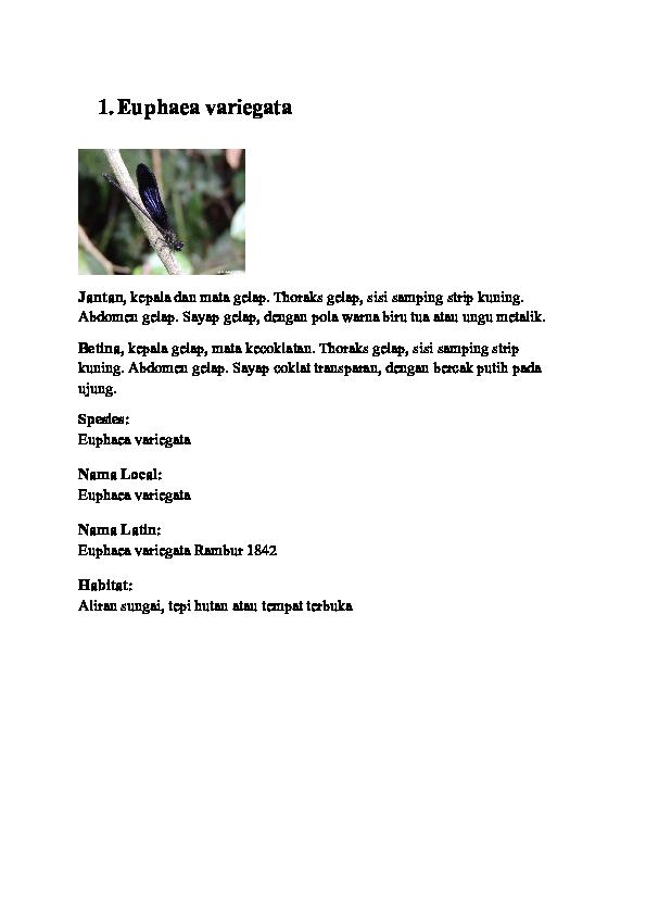 500+ Gambar Capung Hitam Putih HD Paling Baru