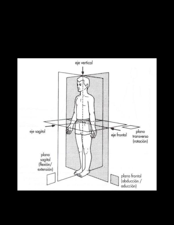 Planos y ejes del cuerpo humano pdf