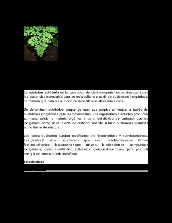 como es la nutricion del reino vegetal