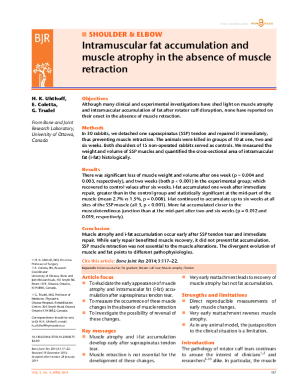 PDF) Intramuscular fat accumulation and muscle atrophy in the