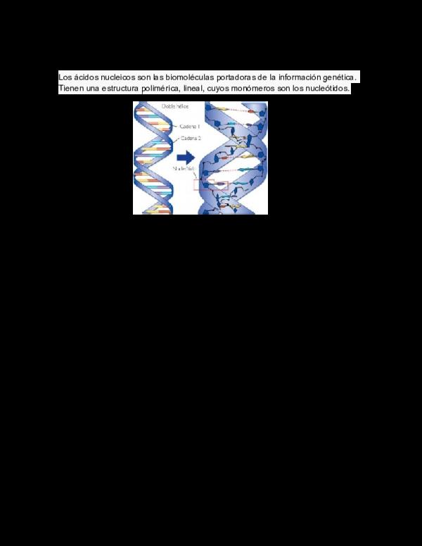 Doc ácidos Nucleicos Elida Lopez Academia Edu