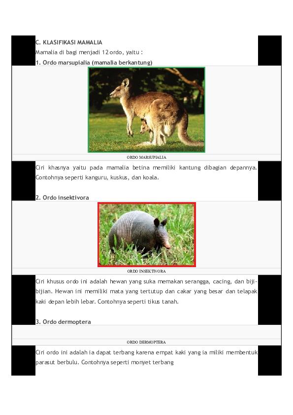 98+ Klasifikasi Hewan Mamalia Beserta Gambar Gratis