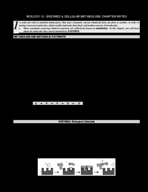 PDF) BIOLOGY 12 -ENZYMES & CELLULAR METABOLISM: CHAPTER