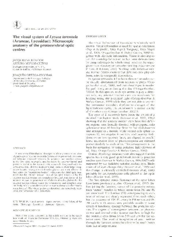 The Visual System Of Lycosa Tarentula Araneae Lycosidae