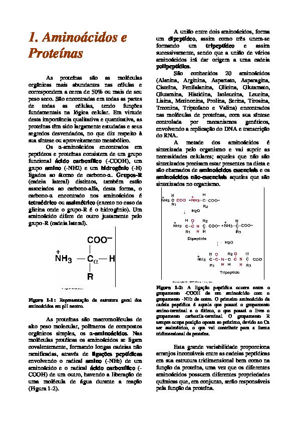 Pdf Aminoacidos E Proteinas Pgs 9 A 13 E 17 Bia Veloso