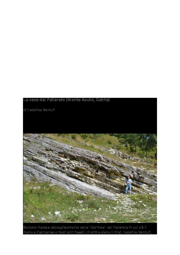 ciò che è relativo datazione di rocce e fossili