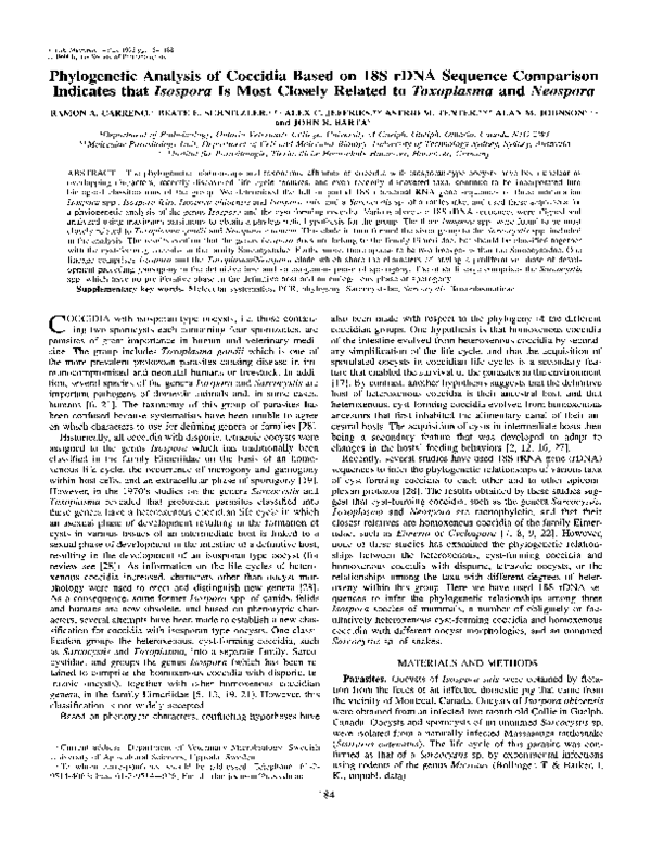 toxoplasma coccidio