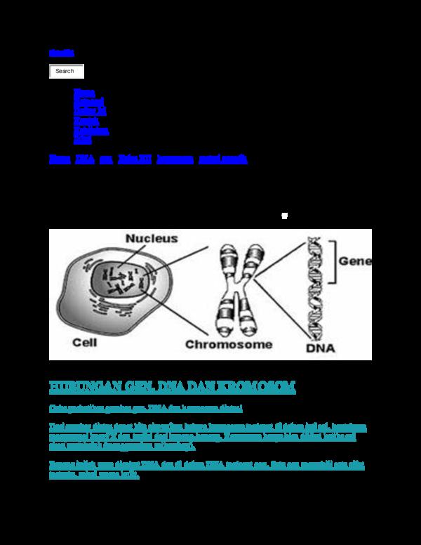 Gen Dna Dan Kromosom Maria Suhartin Academiaedu