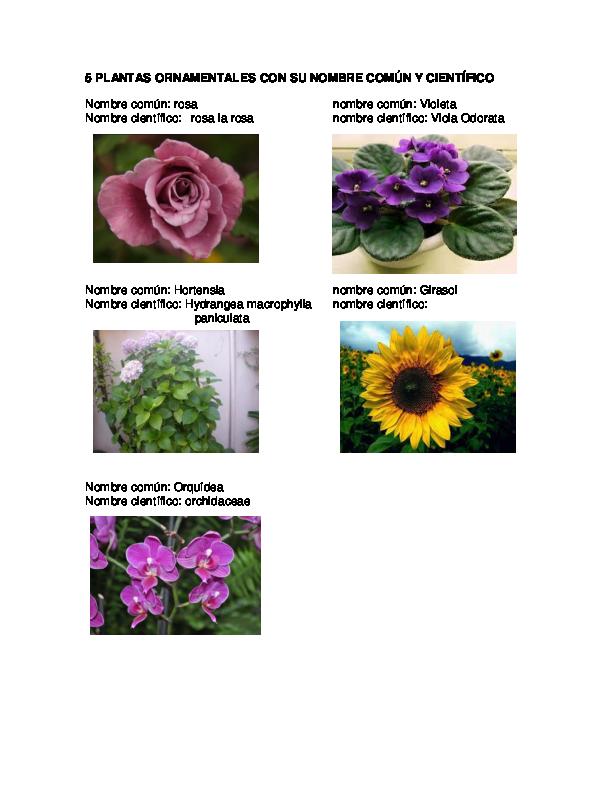doc 5 plantas ornamentales con su nombre com n y