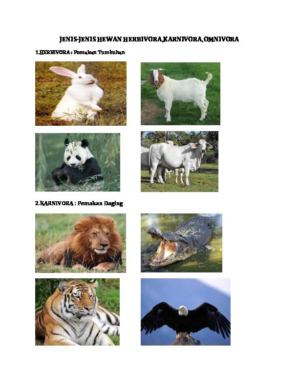 81 Gambar Hewan Pemakan Daging (Karnivora) Gratis Terbaru