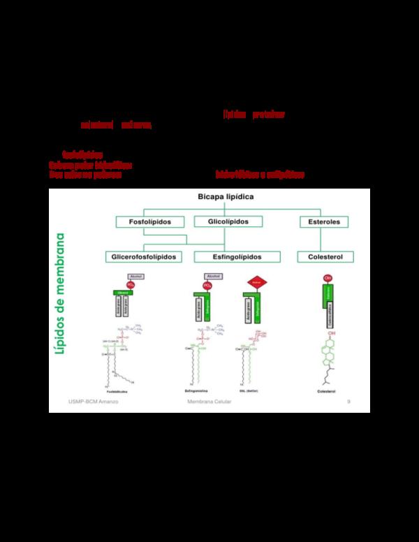 Doc Membrana Celular O Plasmatica Docx Adri Cano