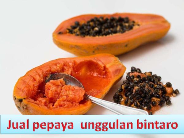 pdf 081218908795 distributor buah pepaya california diola eunice academia edu academia edu