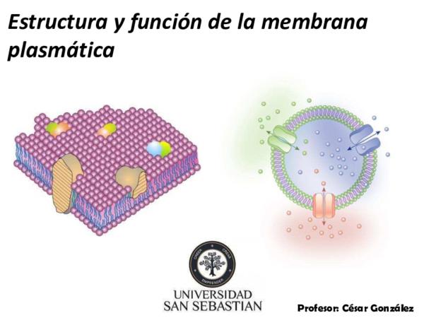 Pdf Estructura Y Función De La Membrana Plasmática María