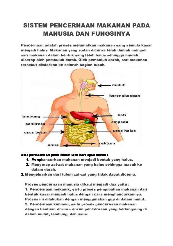 Doc Sistem Pencernaan Makanan Pada Manusia Dan Fungsinya Washilatul Rohaini Academia Edu