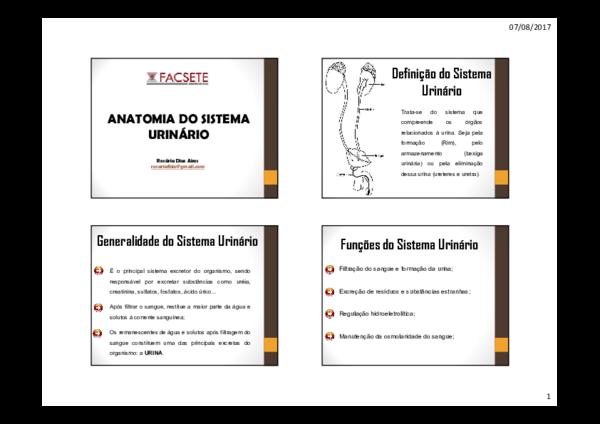 Pdf Anatomia Do Sistema Urinário Marina Guerra Academia Edu