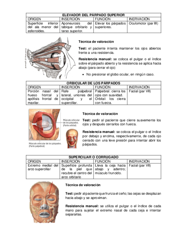 Dolor en el hueso de la ceja superior