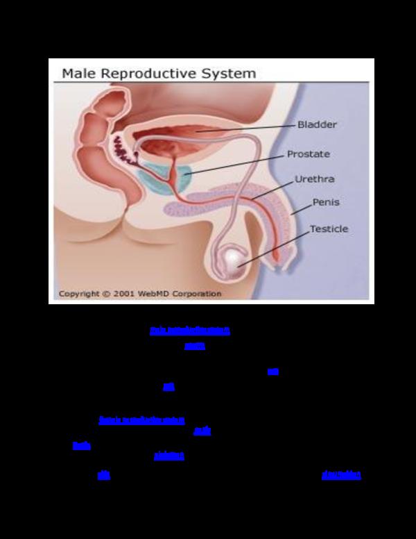 DOC) REPRODUCTION SYSTEM docx | collins collisha tashcol chimwanga
